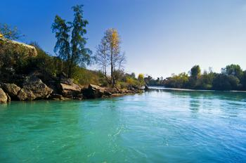 靠河流维持生命的生物的种类和个体数量都是非常惊人的,动物和微生物