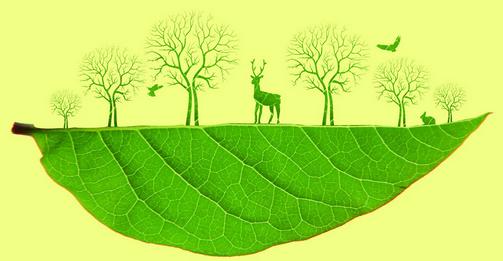 背景 壁纸 绿色 绿叶 树叶 植物 桌面 503_261