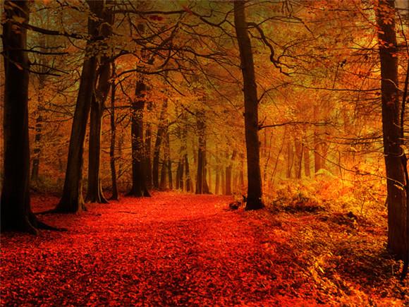 我一定不错过这样的风景:漫步在一条蜿蜒的乡间小道,细心聆听窸