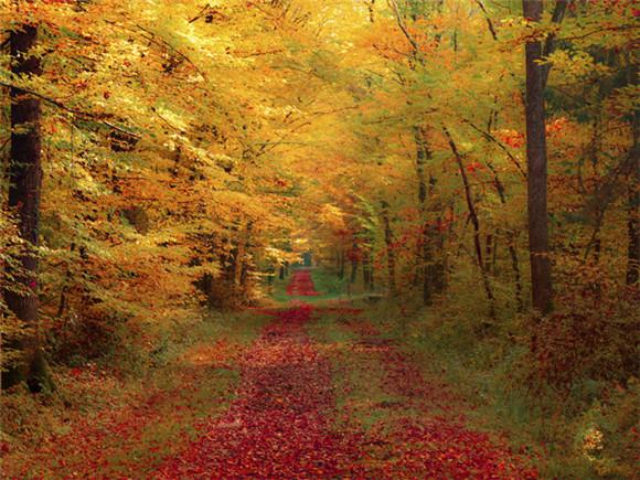 秋天现实风景图片