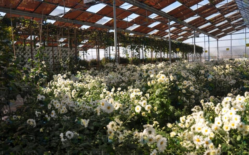 青岛华盛绿能农业科技有限公司官网