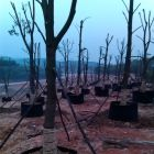 大型苗木场日常管理