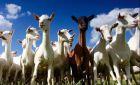 杨凌众羊联合牧场有限公司